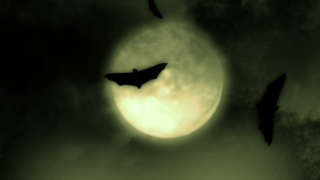 Silhouettes of bats flying under the full moon