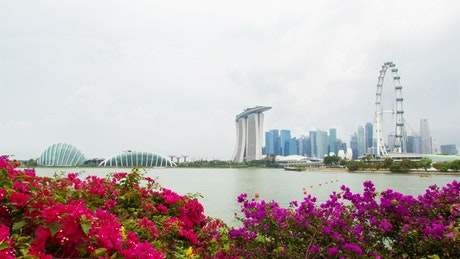 Singapore cityscape and flowers