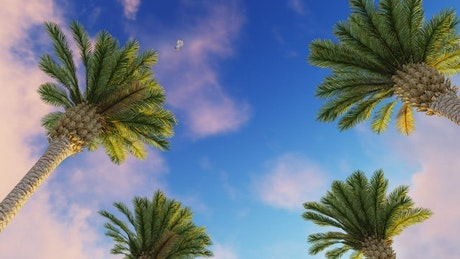 Sky of a sunny day with birds and palm trees