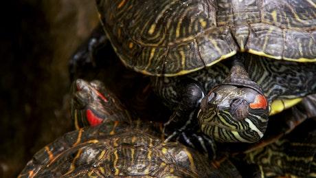 Sleeping turtles detailed view
