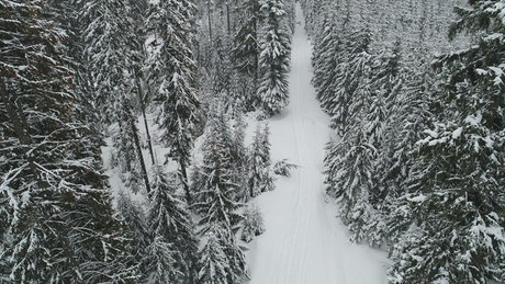 Slow aerial tour of a winter path in a forest