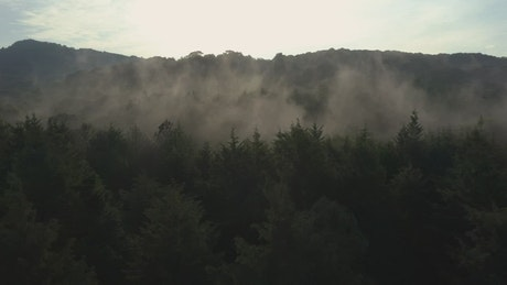 Slow aerial tour through a mist-covered forest