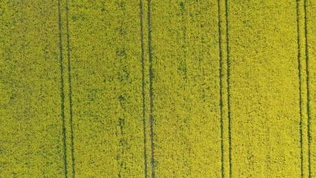 Slow moving shot of crops