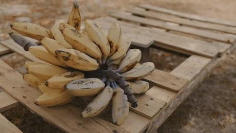Small bananas over a wooden base