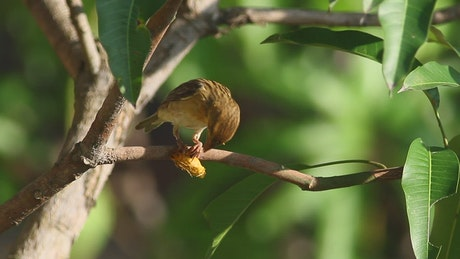 Small bird eating an insect