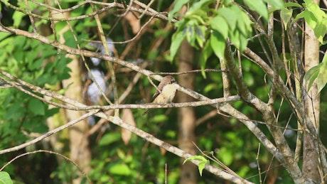 Small bird looking around