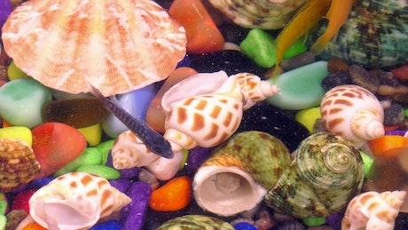 Small fish swimming in a colorful aquarium