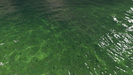 Small ocean waves near the shore