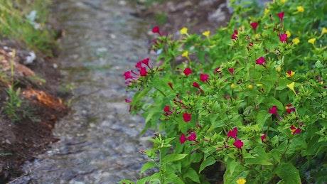 Small river in a flower garden