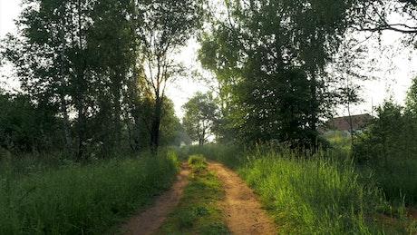 Small rural road between fields