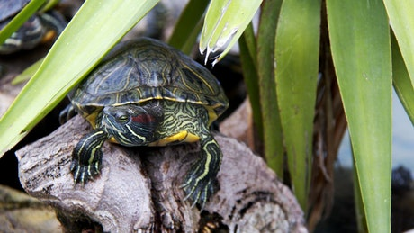 Small turtle resting in nature