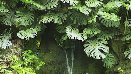 Small waterfall between plants