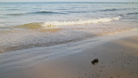 Small waves and seaweed