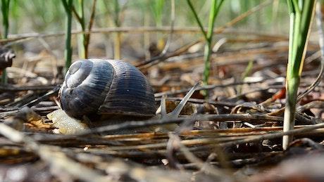 Snail moving through a garden