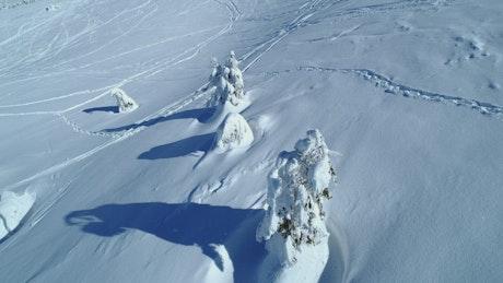 Snow-covered pine trees near a ski station