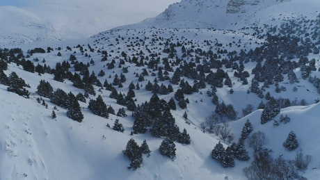 Snow covered trees across a mountain