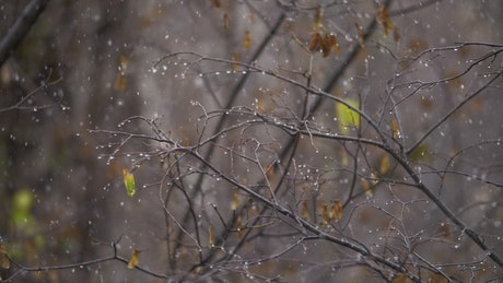 Snow falling in the Autumn