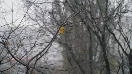 Snow falling in the Autumn among tree branches
