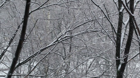 Snow falling through empty trees