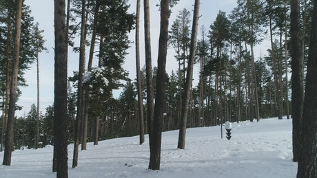 Snowboarding down a forest path