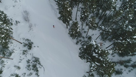 Snowboarding through a forest