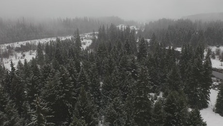 Snowing in a canadian forest