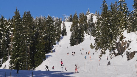 Snowy hill in a forest full of skiers