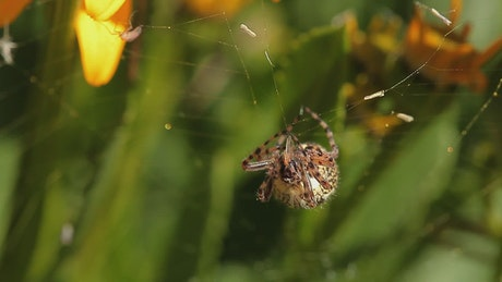 Spider eating a tiny insect