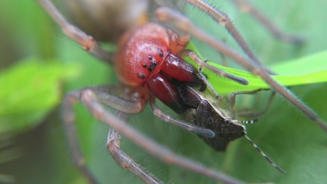 Spider eating an insect