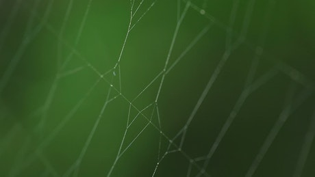 Spider on invisible web