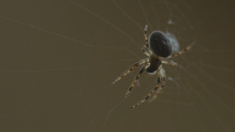 Spider standing on the web