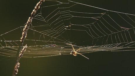 Spider web at back light