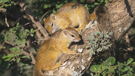 Squirrels on a tree branch