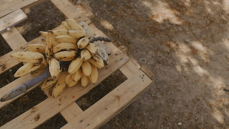 Stalk of small bananas over a wooden base