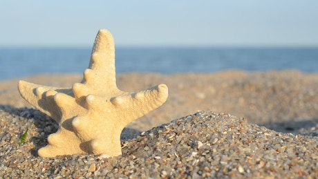 Star shaped shell in the sand