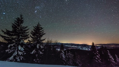 Starry night in the forest in winter