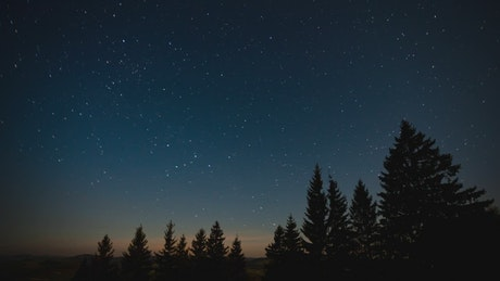 Starry sky on a quiet night in the forest