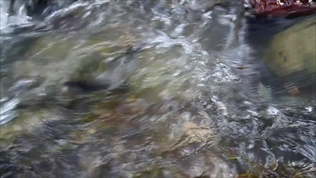 Stream in slow motion