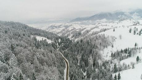 Stunning frozen landscape in the woods