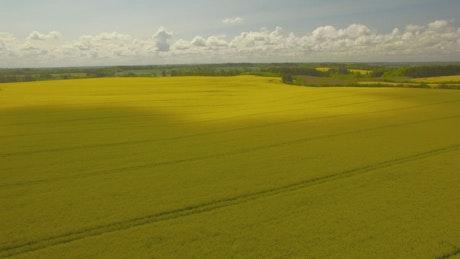 Summer fields, aerial shot