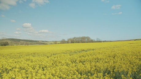 Summer fields drone shot