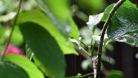 Summer rainfall on plants