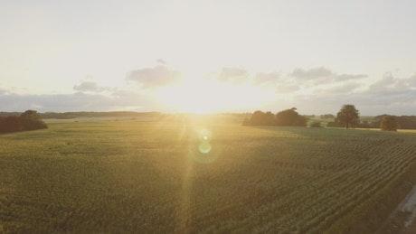 Summer sunshine over a field