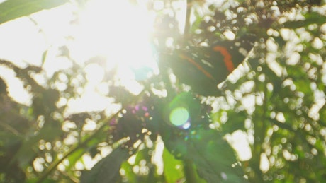 Sun against a Butterfly