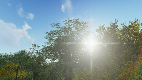 Sun flare and trees, 3D