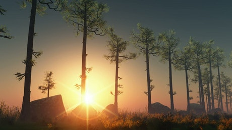 Sun rays through a line of trees