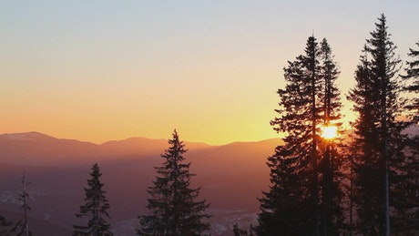 Sun rising in the skyline in the forest
