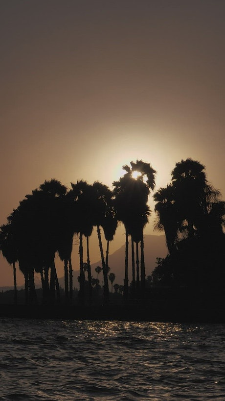 Sun setting or rising over palm trees
