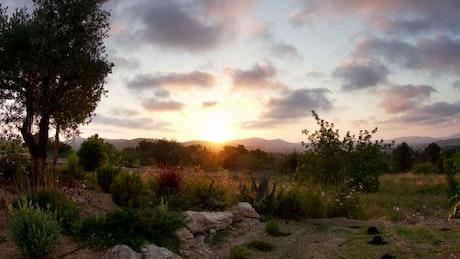 Sun setting over a garden