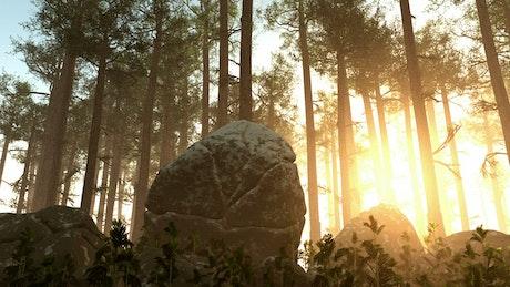 Sun shining across a forest floor